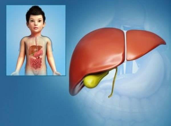 Увеличен желчный пузырь: причины, лечение, что делать