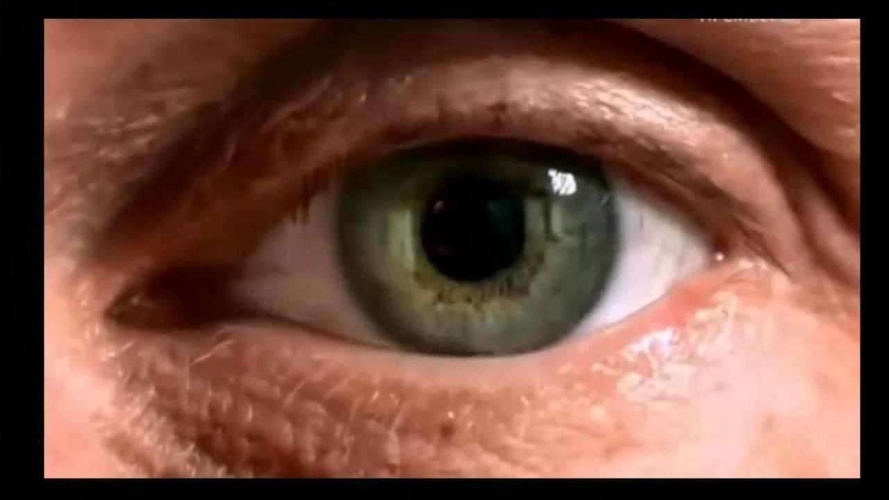Сонник червяк в глазу. к чему снится червяк в глазу видеть во сне - сонник дома солнца
