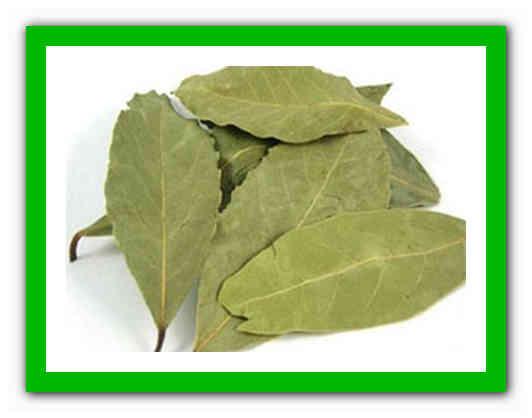 Лечение лавровым листом цистита
