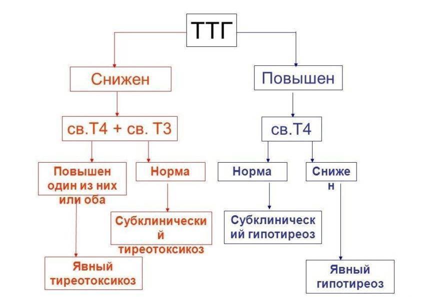 тиреотропный гормон ттг повышен