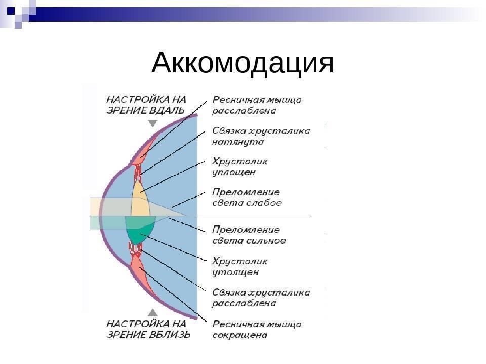 нарушение аккомодации глаза симптомы