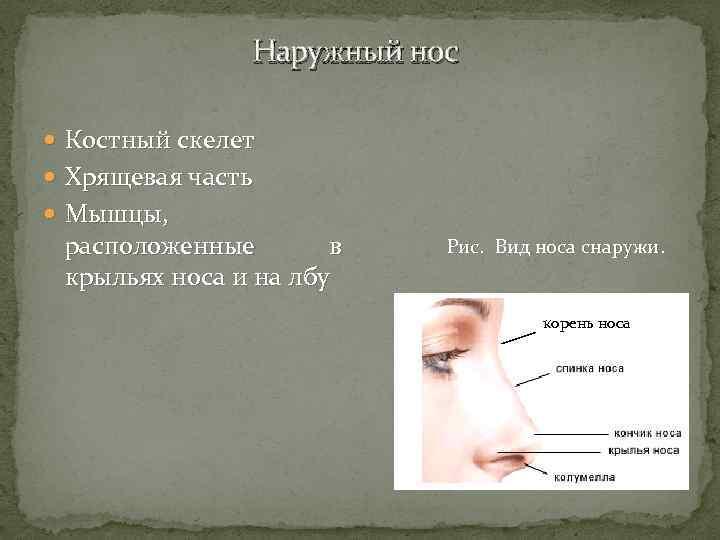 Покраснение у крыльев носа. анатомия и функции. когда появляется болевой синдром носа без насморка