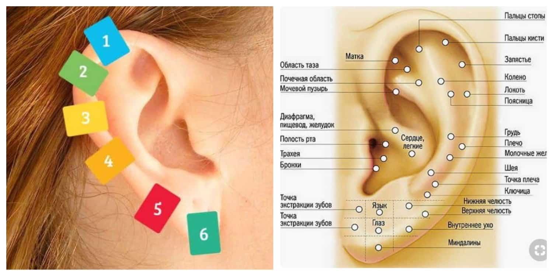 Точки на ушах отвечающие за органы. с точки зрения восточной медицины, ухо - не просто орган слуха, а мощная акупунктурная система, связанная с работой внутренних органов.