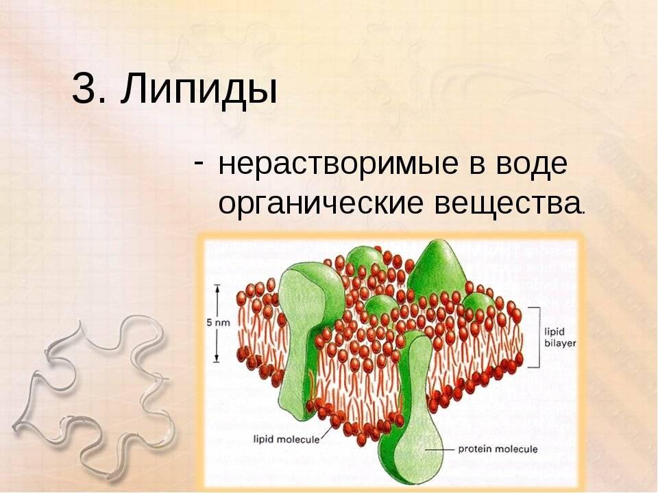 Что такое липиды и их функции