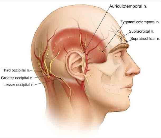 Невралгия затылочного нерва: лечение, симптомы и профилактика