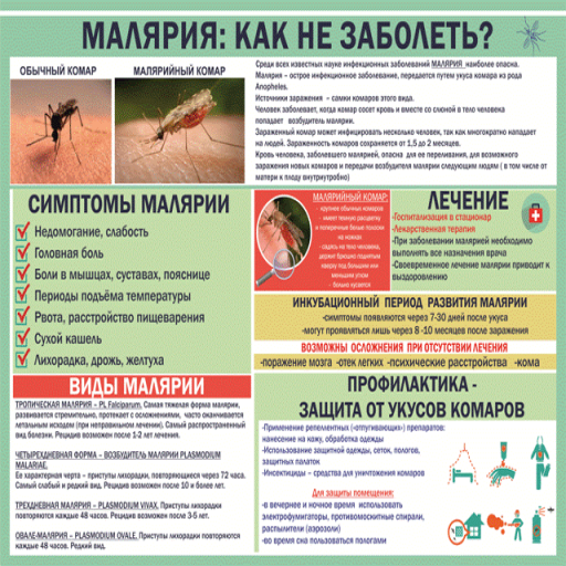 Симптомы, лечение и профилактика заболевания малярия (малярийного паразита)
