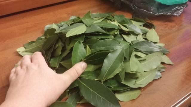 Лавровый лист от гайморита рецепт