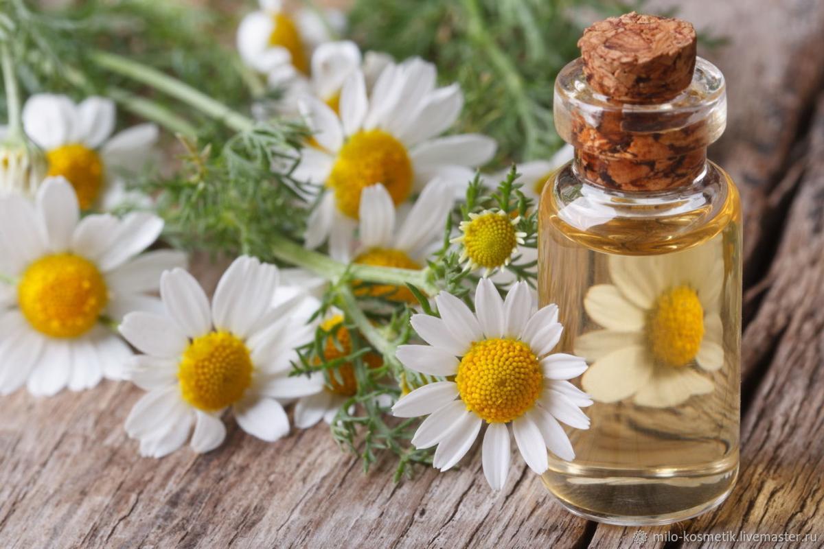 Польза ромашки при лечении цистита: процедуры и рецепты
