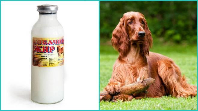 Собачий жир лечебные свойства детям